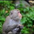 猴園DSC_5404