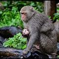 猴園DSC_5415