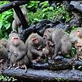 猴園DSC_5430