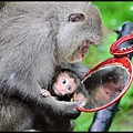 猴園DSC_5494