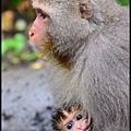 猴園DSC_5540