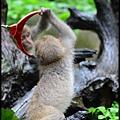 猴園DSC_5564