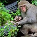 猴園DSC_5567