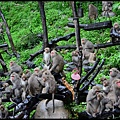 猴園DSC_5569