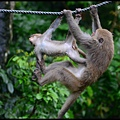 猴園DSC_5602