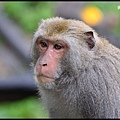 猴園DSC_5603