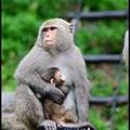 猴園DSC_5630