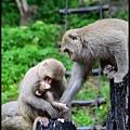 猴園DSC_5636