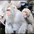 猴園DSC_5646
