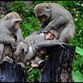 猴園DSC_5654