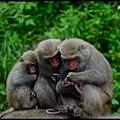 猴園DSC_5700