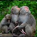 猴園DSC_5703