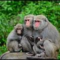 猴園DSC_5704