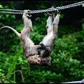 猴園DSC_5706