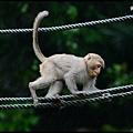 猴園DSC_5707