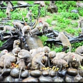 猴園DSC_5717