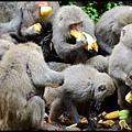 猴園DSC_5719