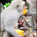 猴園DSC_5726