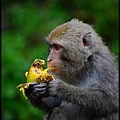 猴園DSC_5740