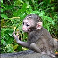 猴園DSC_5746