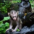猴園DSC_5759