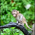 猴園DSC_5774