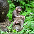 猴園DSC_5777