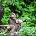 猴園DSC_5779