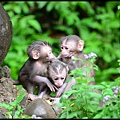 猴園DSC_5793