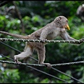猴園DSC_5815