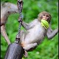 猴園DSC_5824