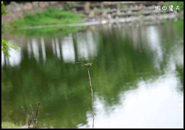 親水公園DSC_8822