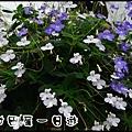 田尾DSC_0804
