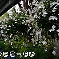田尾DSC_0805
