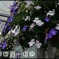 田尾DSC_0807