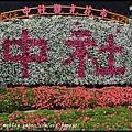 中社花市DSC_9686