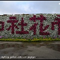 中社花市DSC_9691