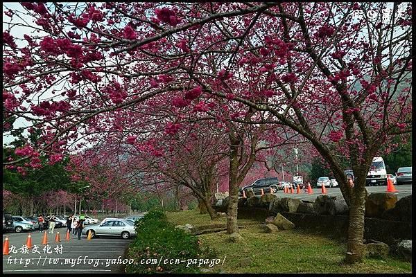 九族文化村DSC_2033