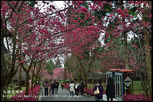 九族文化村DSC_2166