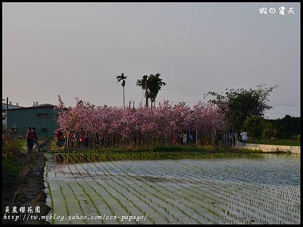 員農櫻花園DSC_2475