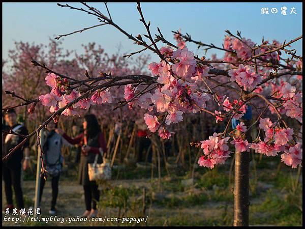 員農櫻花園DSC_2496