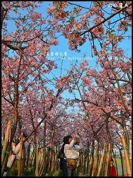員農櫻花園DSC_2502
