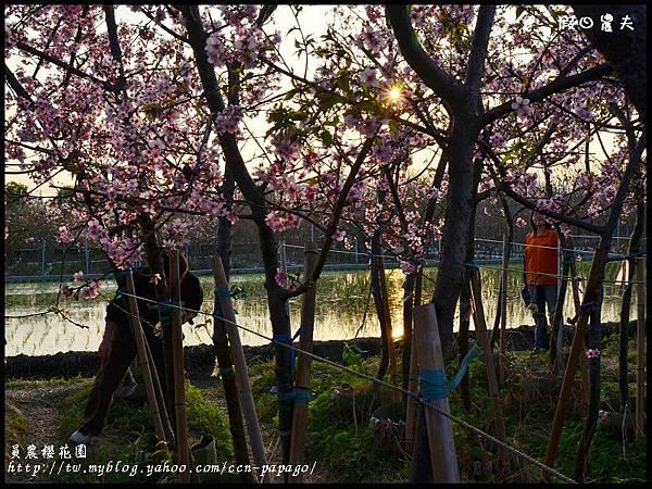 員農櫻花園DSC_2520