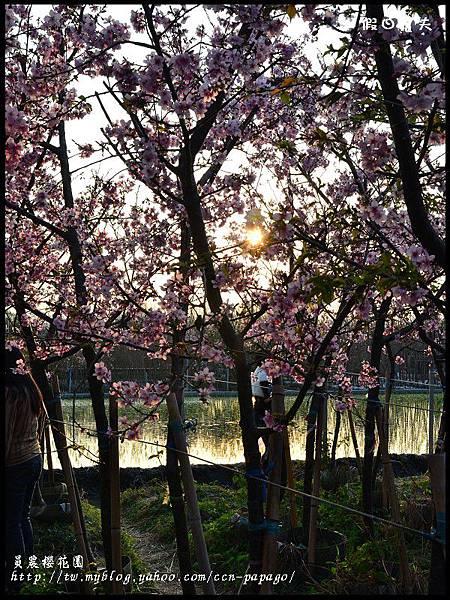 員農櫻花園DSC_2523