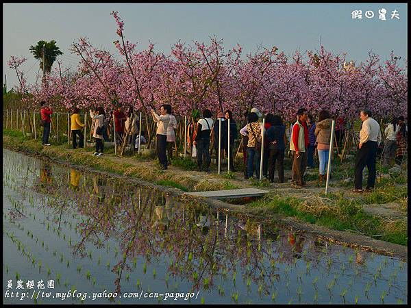 員農櫻花園DSC_2532