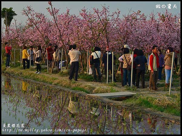 員農櫻花園DSC_2533