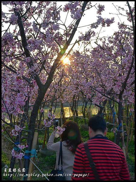 員農櫻花園DSC_2525