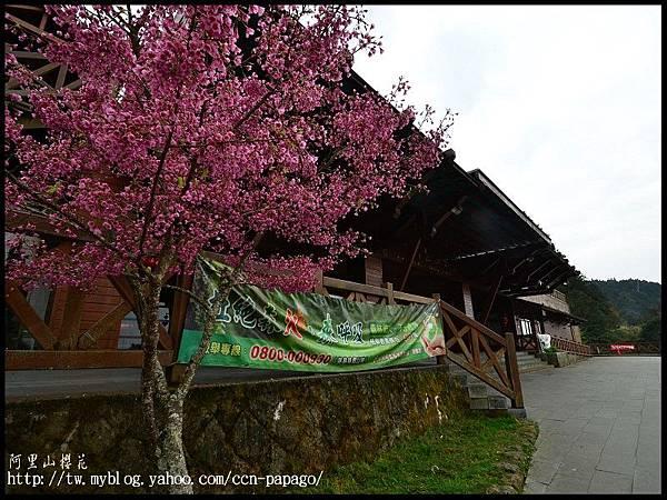 阿里山櫻花DSC_4045