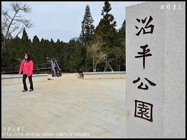 阿里山櫻花DSC_4056