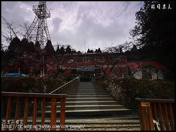 阿里山櫻花DSC_4079